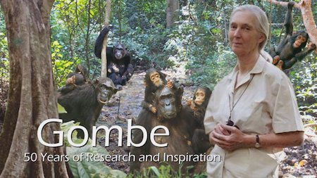 Dr. Jane Goodall - Gombe National Park