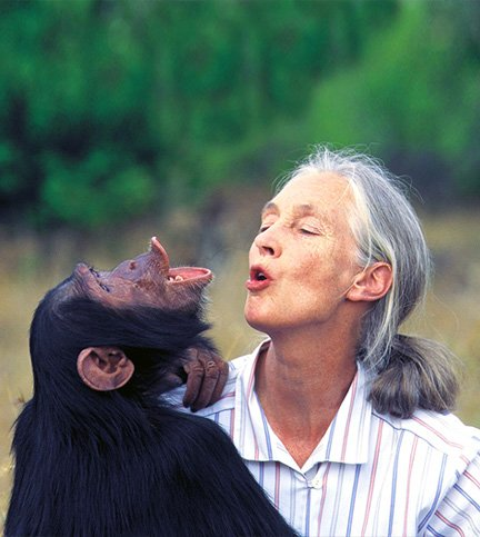 Apes >> The Jane Goodall Institute Australia | Dr. Jane Goodall official Australian website.