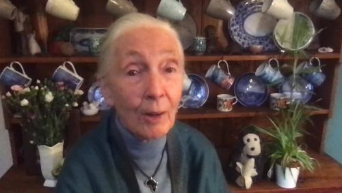 March 20, 2020: A Message of Hope from Dr. Goodall in the Face of COVID-19